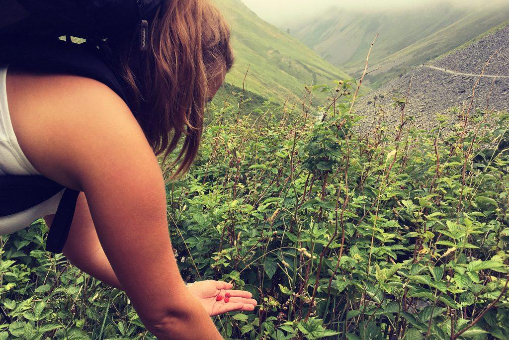 La cueillette en randonnée, une activité accessible à tous